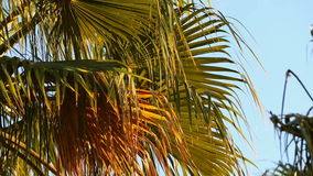 Palm Tree. Blue Sky with Green Palm Tree stock video