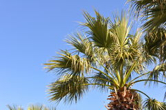 Palm Tree and Blue Sky Stock Images