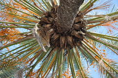 Palm tree on blue sky Stock Photo