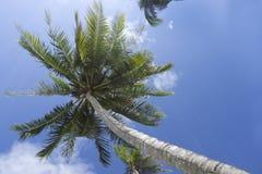 Palm tree in blue sky, Kho Kood Thailand Royalty Free Stock Image