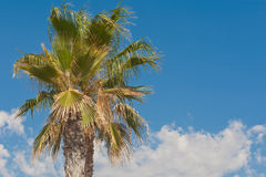 Palm Tree and the blue sky landscape Royalty Free Stock Image