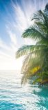 Palm Tree in the Blue sky Stock Images