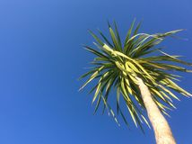 Palm tree on a blue sky Royalty Free Stock Images