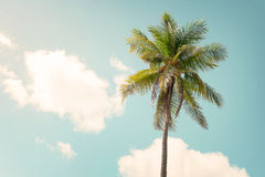 Palm tree on blue sky in summe. Vintage nature background - Palm tree on blue sky in summer. vintage color tone Royalty Free Stock Images