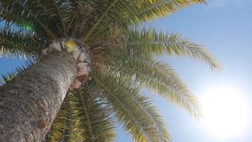 Palm tree and blue sky and sun - holiday scene. Vacation background - Palm tree and blue sky and sun - holiday scene stock video