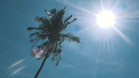 Palm tree on blue sky. Sunshine in hot day stock video footage