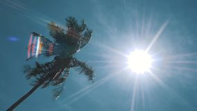 Palm tree on blue sky. Sunshine in hot day stock video