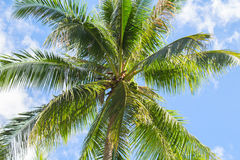 Palm tree and blue sky tropical island photo. Sunny exotic summer card. Royalty Free Stock Photos