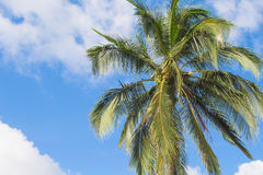 Palm tree and blue sky tropical island photo. Sunny exotic summer card. Stock Photo