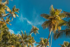 Palm tree and blue sky. Tropical paradise postcard stock photos