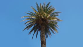 Palm tree on a blue sky. Two animations of falling down and destruction gold coin. Animation made in slow motion stock video footage