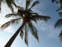 Palm tree and blue sky Royalty Free Stock Photos