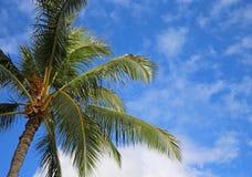 Palm tree on blue sky Stock Photos