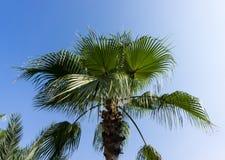 Palm tree  blue sky view wallpaper Stock Photos