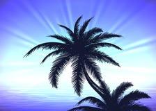 Palm tree on blue sunrise background. Silhouette of palm tree on the blue gradient sunrise background Stock Photo