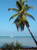 Palm tree and boat. Palm Tree at Punta Cana, Dominican Republic. View of a boat in the distance Royalty Free Stock Images