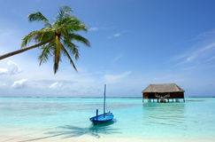 Palm tree and boat at beach Stock Photography