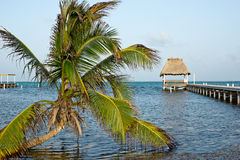 Palm Tree and Boat Dock Stock Photos