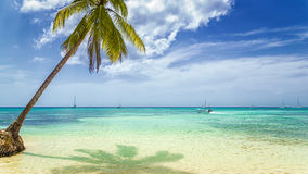 Palm Tree and Boat on Tropical Beach Royalty Free Stock Photography