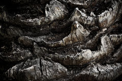 Palm Tree Body Bark. Trunk Nature Background Royalty Free Stock Photos