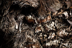 Palm Tree Body Bark Stock Image