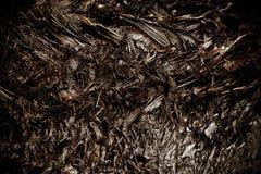 Palm Tree Body Bark Stock Photography