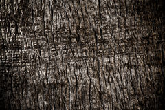 Palm Tree Body Bark. Trunk Nature Background Stock Photo