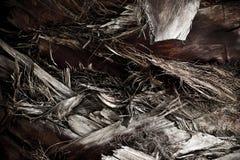 Palm Tree Body Bark Stock Images