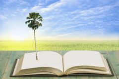 Palm tree on Book  with rice filed Royalty Free Stock Image