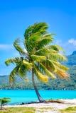 Bora Bora, palm