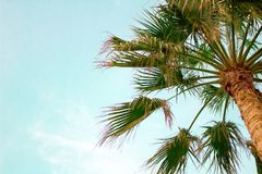 Palm tree bottom view blue summer sky copyspace stock photos