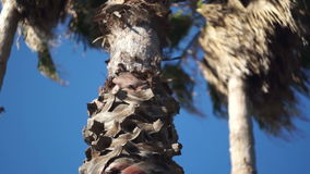 Palm tree, a bottom view. The camera moves in a horizontal plane stock video