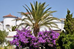 Palm tree and bougainvillea Stock Images