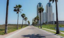 Palm Tree Boulevard Stock Photo