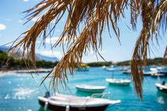 Palm tree branch covering beautiful blue sea water Stock Photos