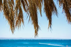 Palm tree branch covering beautiful blue sea water Royalty Free Stock Photography