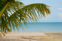 A Palm Tree Branch and Fishing Boat at the Beach Stock Images
