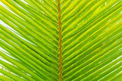 Palm Tree Branch Summer Background Stock Photos