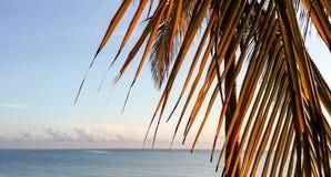 Palm tree branch at sunrise on Atlantic ocean. Closeup image of dry palm tree branch at sunrise on Atlantic ocean Stock Images