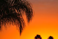 Palm Tree Branch in the  sunset Royalty Free Stock Photo