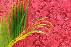 Palm Tree Branch on Textured Wall Royalty Free Stock Photos