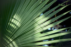 Palm tree branch Stock Images