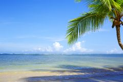 Palm tree branch and tropical beach on Caribbean sea as background. Beautiful tropical beach with palm tree branch and white sand Royalty Free Stock Images