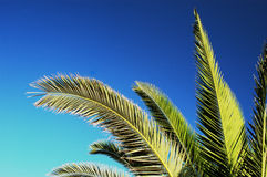 Palm tree branches. In the morning sun, greek islands Stock Photography