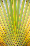 Palm tree branches abstract texture Royalty Free Stock Images