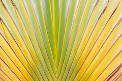 Palm tree branches abstract texture Stock Photo
