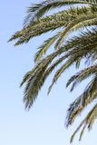 Palm tree branches against blues sky Stock Photos