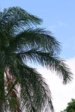 Palm Tree Branches Against a Bright Sky stock images