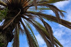 Palm tree branches on blue bright summer sky background. Closeup Royalty Free Stock Images