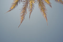 Palm tree branches in a blue sky Stock Photos